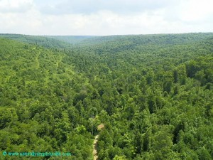 naturallysimplehealth-Kinzua skywalk 3