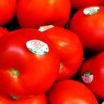 3151- tomatoes