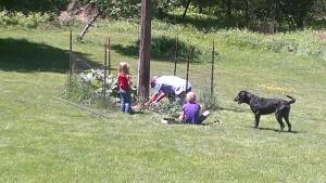 Gardening with Grandad